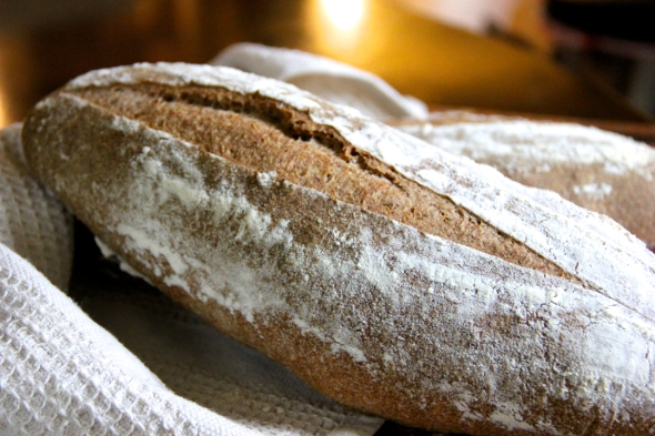 Quintessential Whole Wheat Sourdough