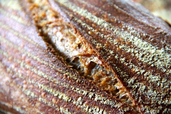 Sicilian Sifted Whole Wheat Sourdough